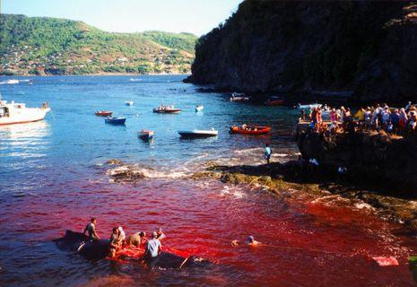 Humpback_whale_butchering_Bequia_cPanbo.JPG